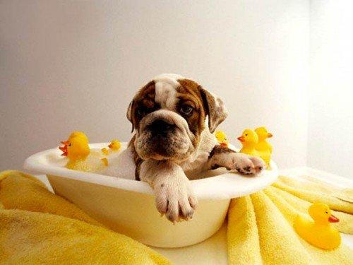 Consejos para la higiene de tu perro