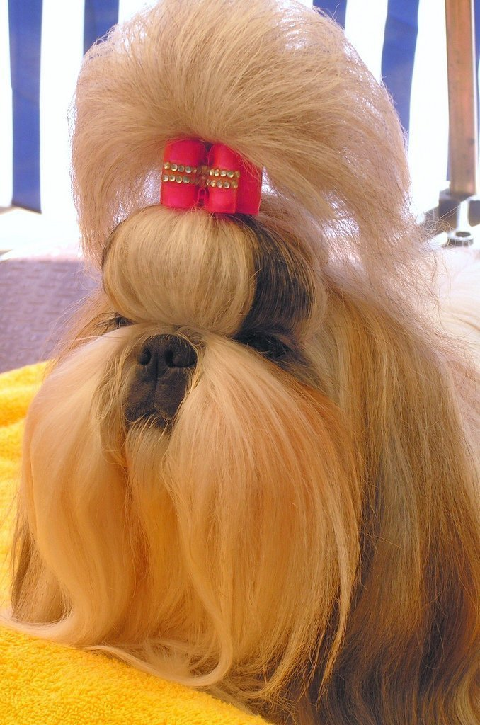 Peinados Perrunos | Peluquerías Caninas