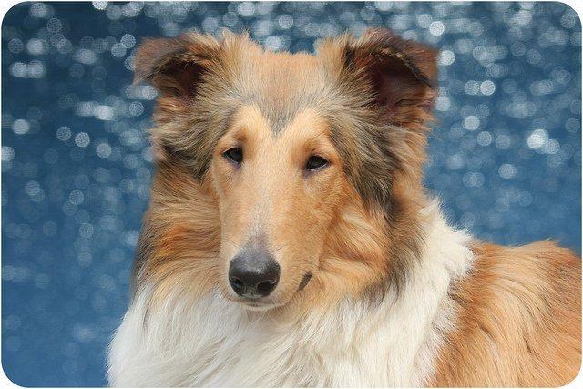 El Corte de raza en las Peluquerías Caninas