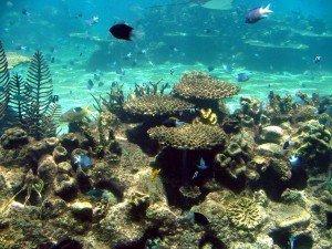 acuarios peces agua fría madagascar