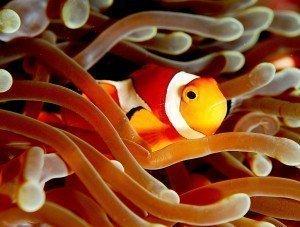 peces de agua fria madagascar mascotas 2