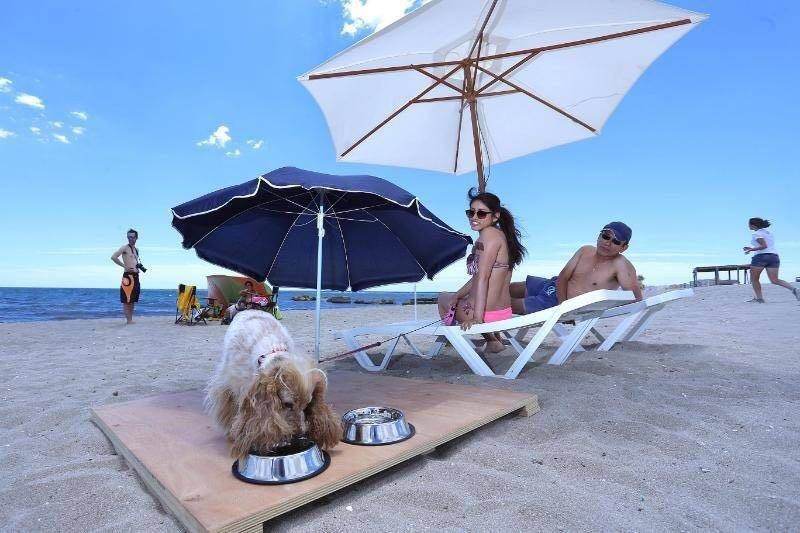 Playa para perros Madagascar Mascotas