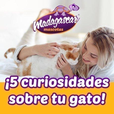 5 curiosidades sobre tu gato