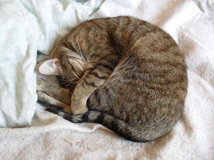 Gato durmiendo - Madagascar Mascotas