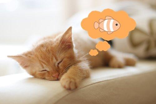 Gato soñando con peces - Madagascar Mascotas