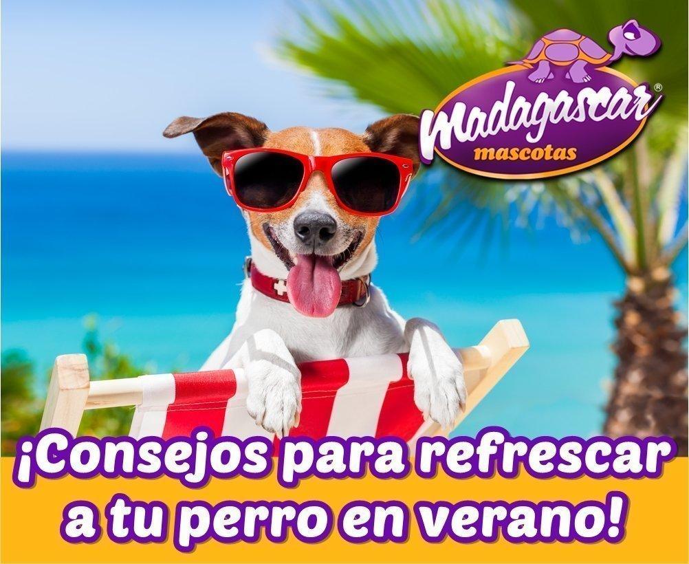 Consejos para refrescar a nuestro perro en verano
