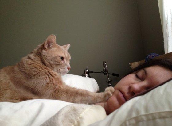 Gato me despierta en la noche - Madagascar Mascotas