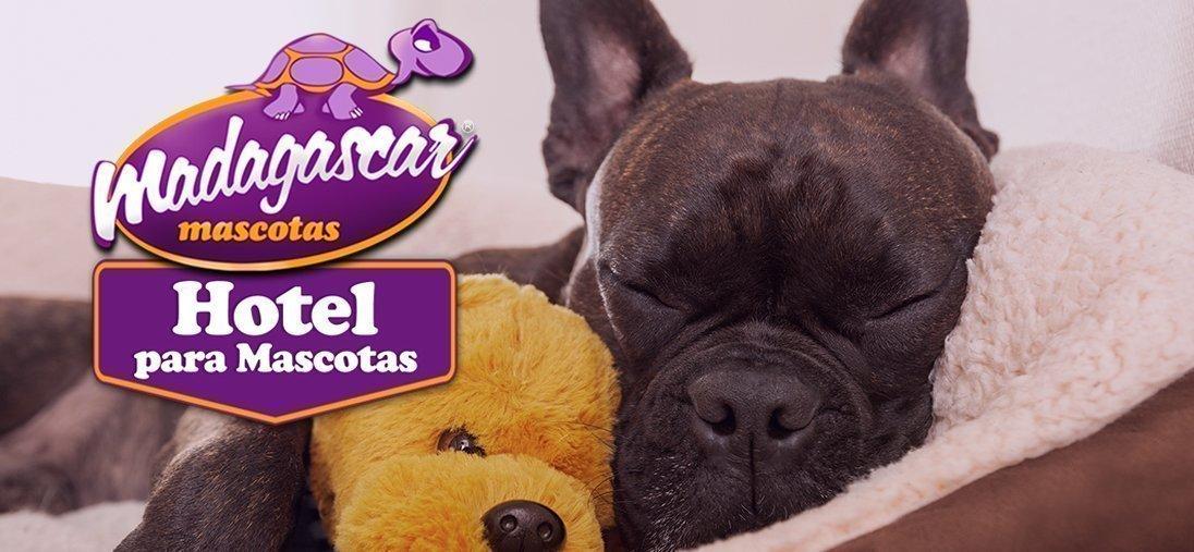 Hotel para mascotas en Alicante