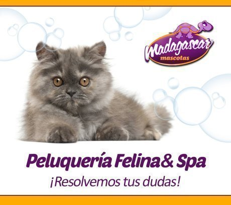 Peluquería felina para tu gato: resolviendo todas las dudas